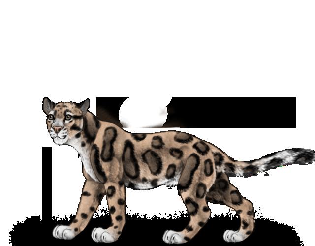 leopard%20patat%20versiunea%20a%202%20eua.png